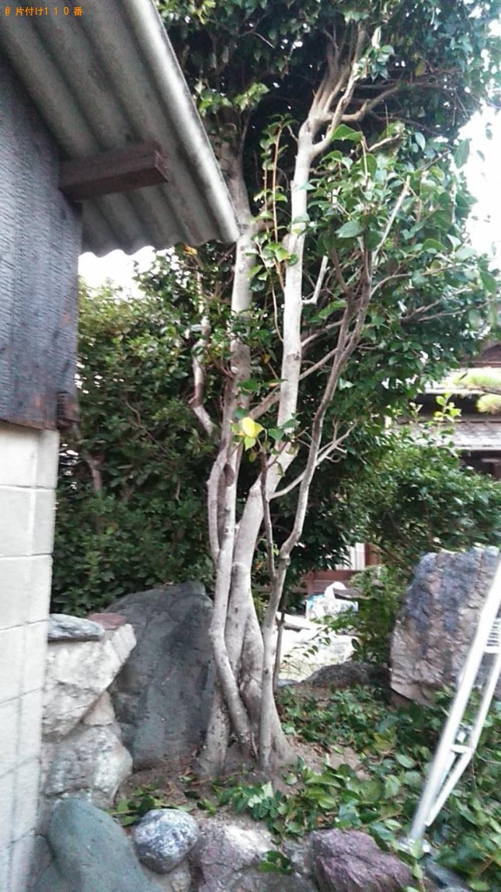 【甲府市】スズメバチの駆除、巣の回収・処分ご依頼 お客様の声